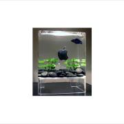 Macquarium Fish Tank